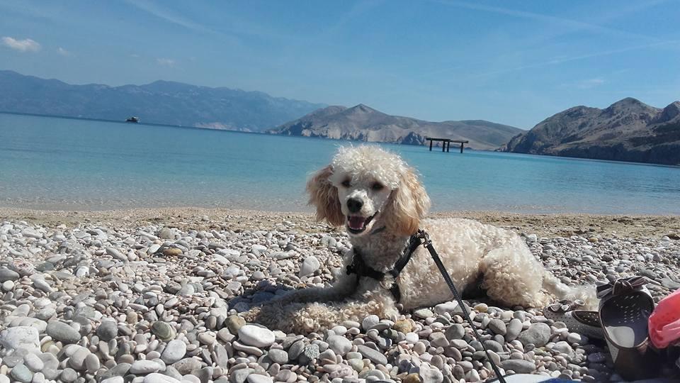 Plaze dla psów w Chorwacji